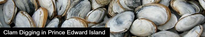 Clam Digging Prince Edward Island