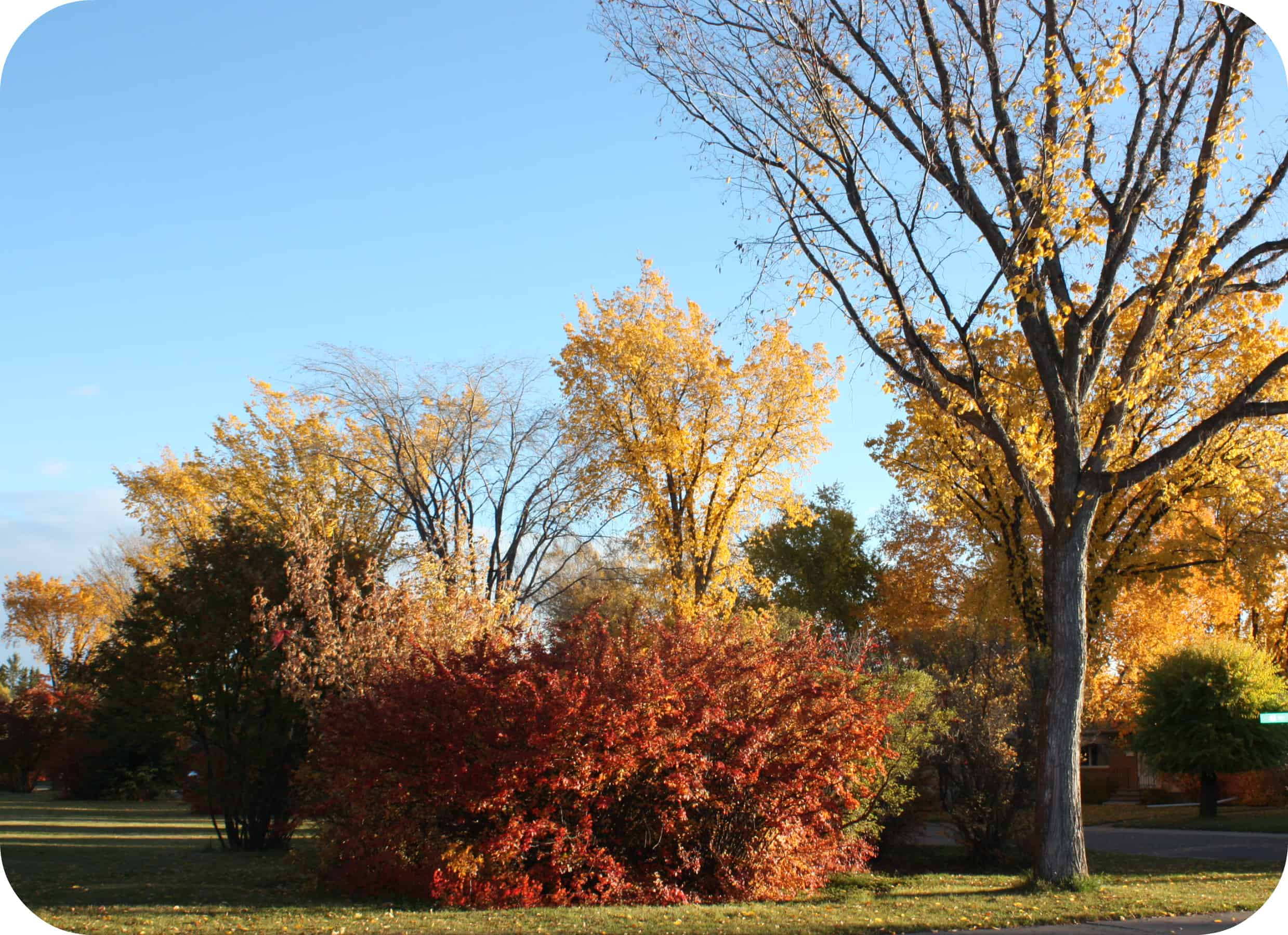 Wordless Wednesday | Surrounded in Fall Colors