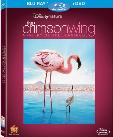 Disneynature: CRIMSON WING: Mystery Of The Flamingos | Blu-ray & DVD Review