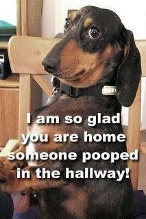 funny animal pictures 4