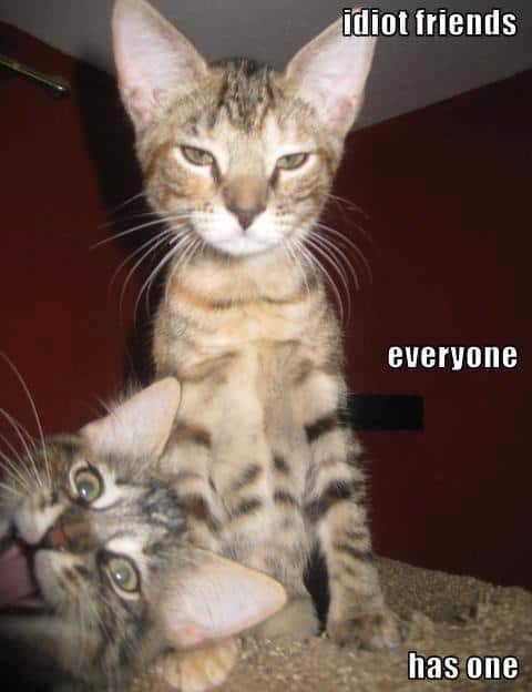 funny animal pictures humor