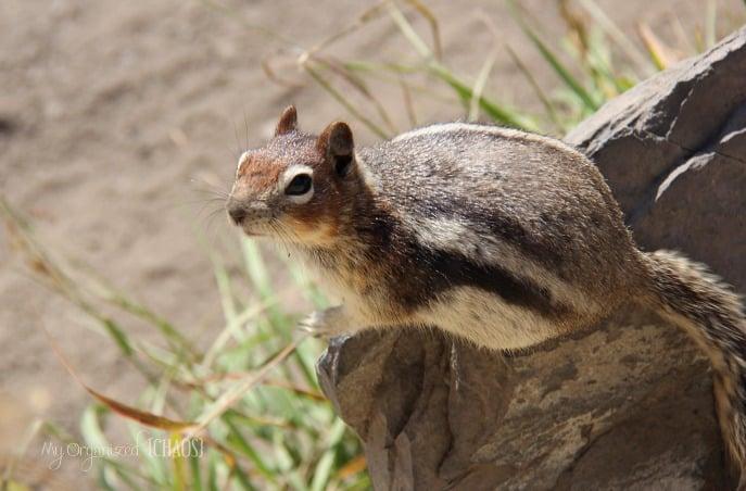 canadian rockies banff wildlife