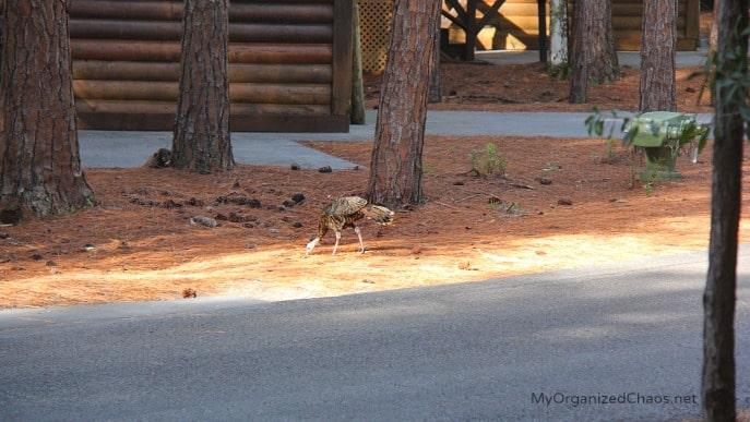 nature animals disneys fort wildnerness cabins