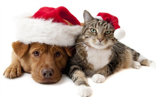 pet-valu-gift-ideas-holidays-dog-cat