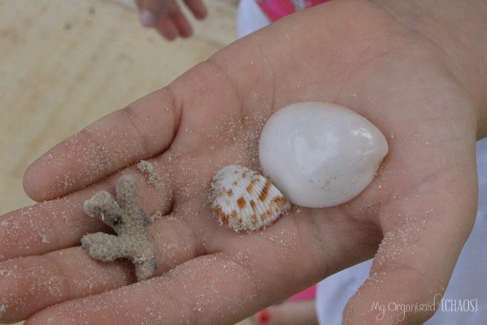 seashells-beaches-negril-jamaica