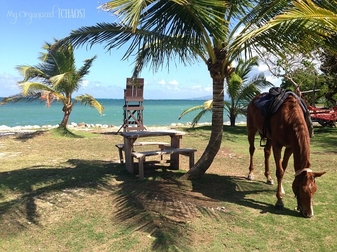 Horseback-Ride-and-Swim-jamaica-travel