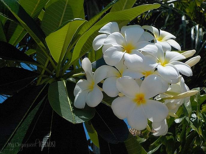 flowers-beaches-turksandcaicos