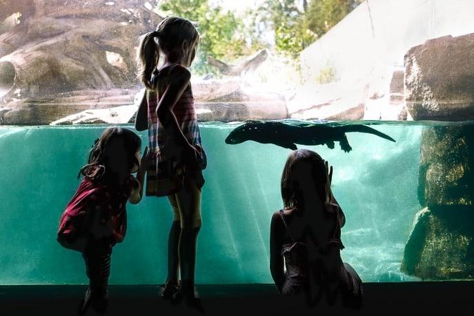 Calgary-Zoo-family-travel