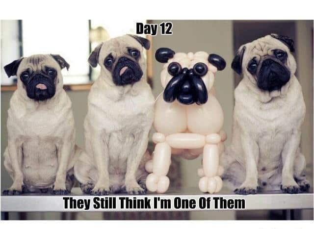 Funny-dogs-photos