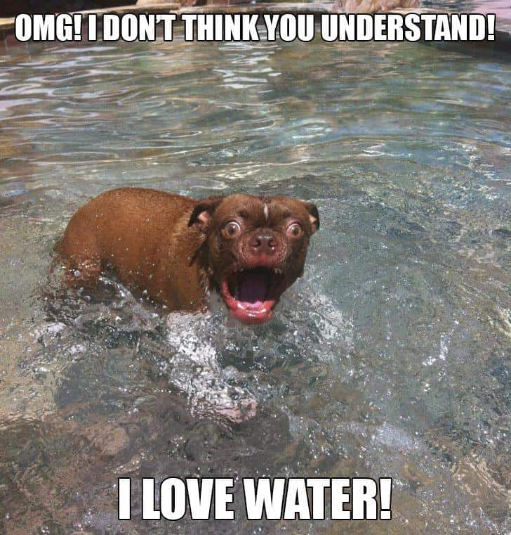 hilarious-dog-picture