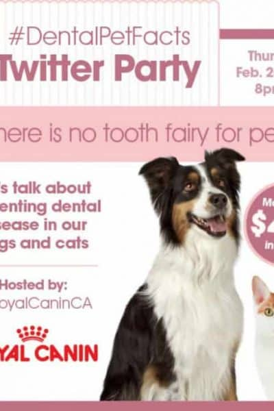 Preventing Dental Disease in Pets – #DentalPetFacts Twitter Party