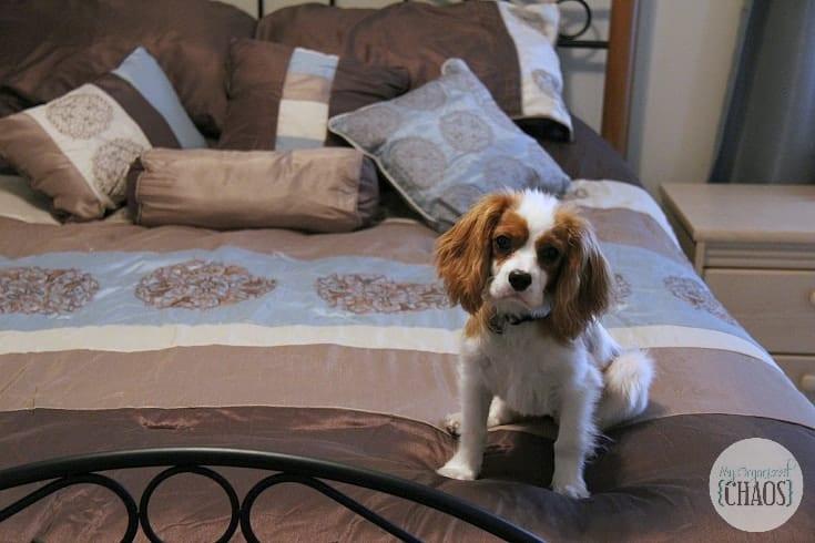 Maple Harbour Bedding Sets