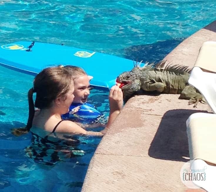 iguana velas vallarta resort canadian family travel blogger