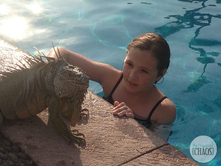 velas vallarta iguana family travel review