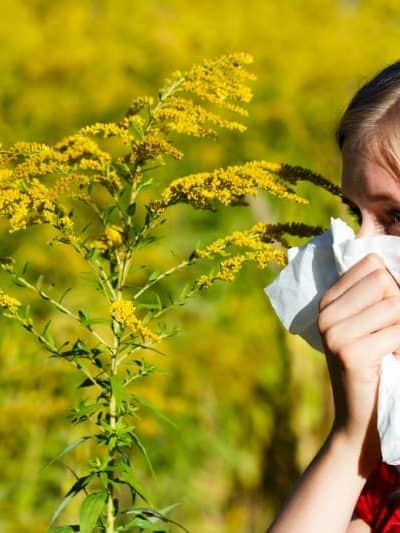 Ragweed Allergy Facts and Relief