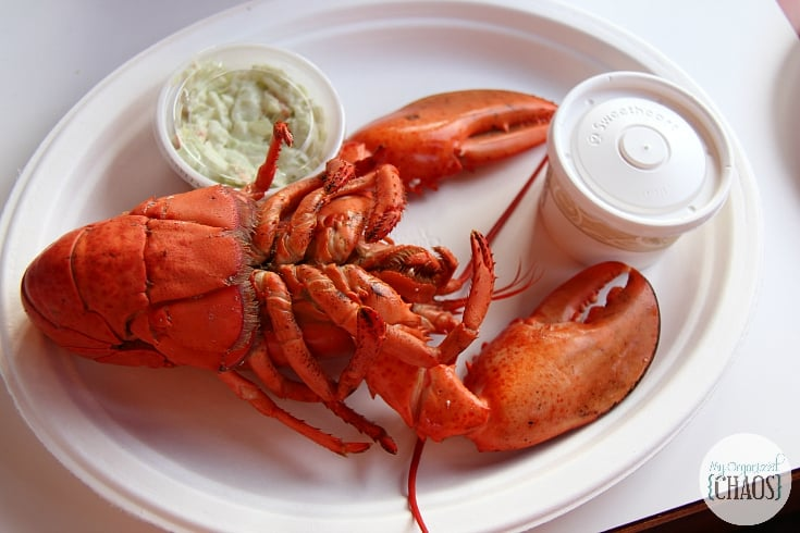 fresh lobster east coast canada new brunswick