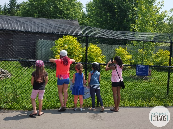 magnetic hill zoo new brunswick family travel