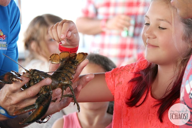 shediac bay cruise lobster tales