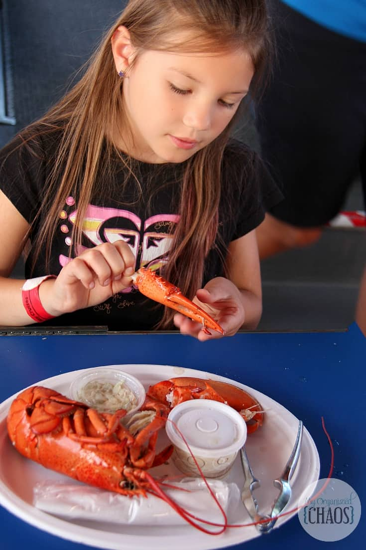 shediac bay cruise lobster tales new brunswick family travel blogger