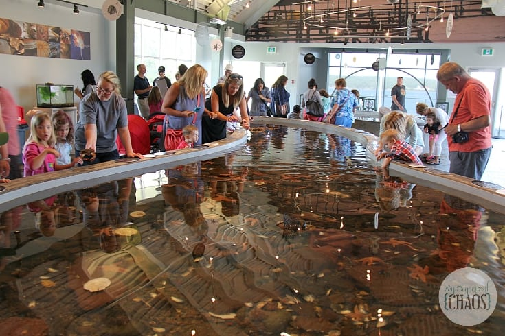 Fundy Aquarium family travel canada new brunswick