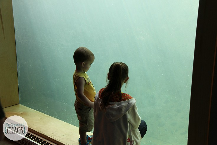 Fundy Aquarium family travel canada