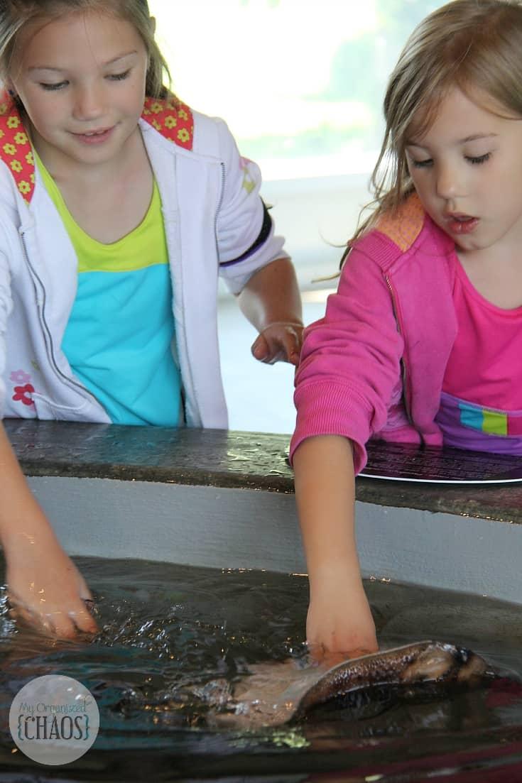 Fundy Discovery Aquarium family travel canada new brunswick