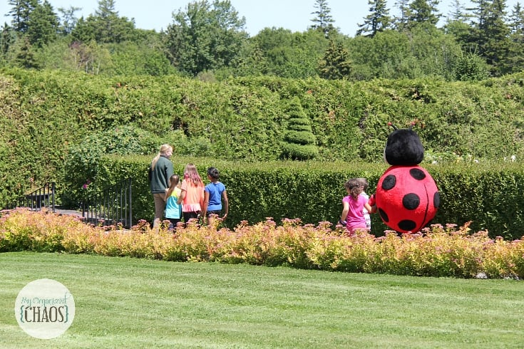 ladybug release Kingsbrae Gardens new brunswick family travel