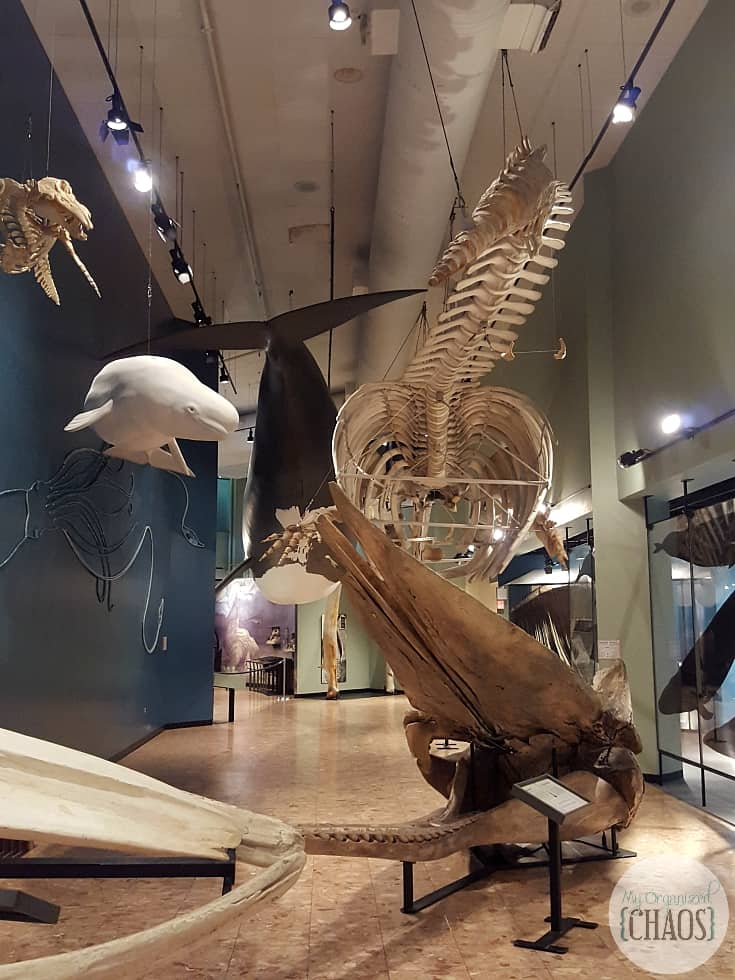 new brunswick museum greal hall of whales