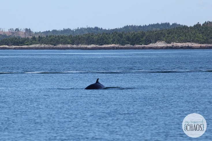 whale watching st andrews new brunswick canada travel
