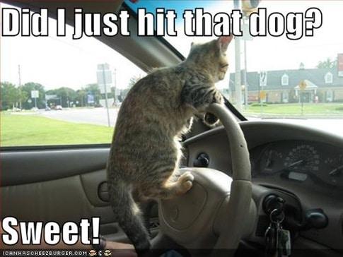 Funny Cat Photos