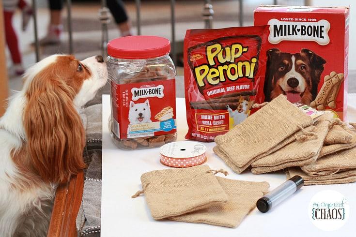 halloween dog treats DIY big heart pet brands