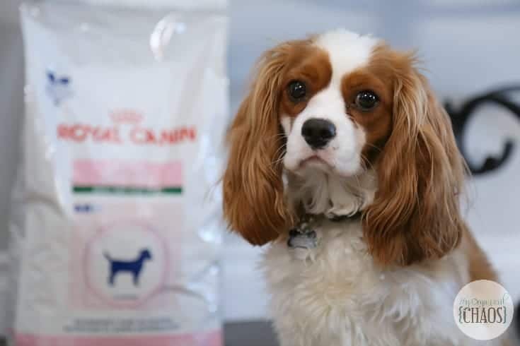 royal canin dental health for pets dogs charlie