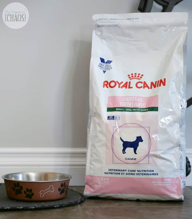 royal canin dental nutrition formula small dogs