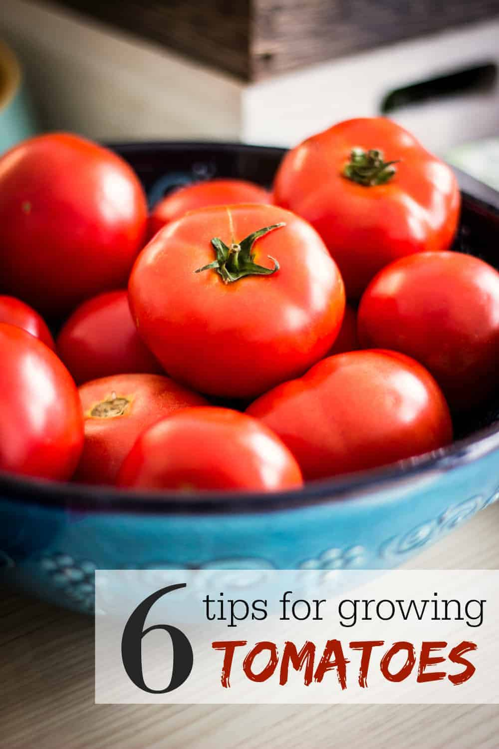 6 Tips for Growing Tomatoes