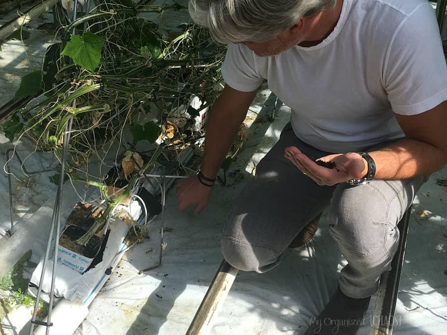 Cucumber Farm Soil Quality