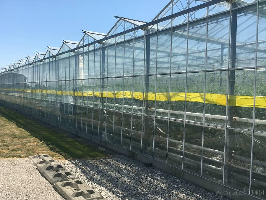 Windset Farms British Columbia